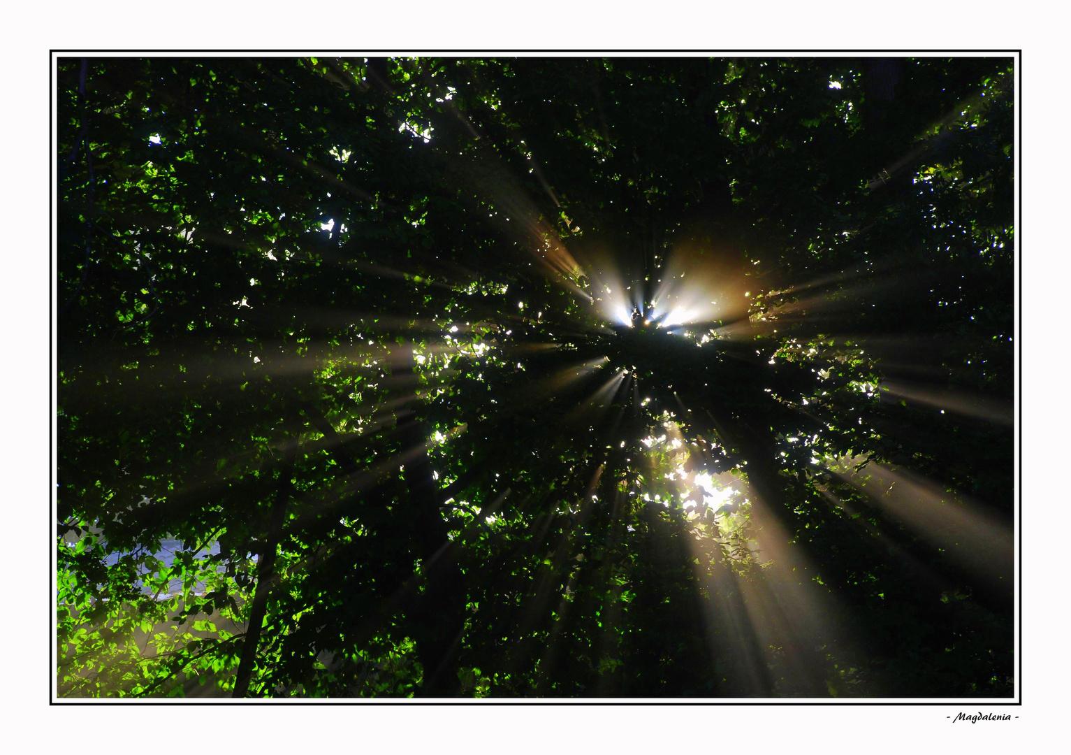 Hélices solaires