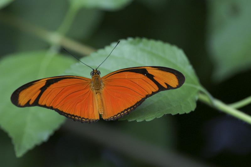 Hélicommiidae