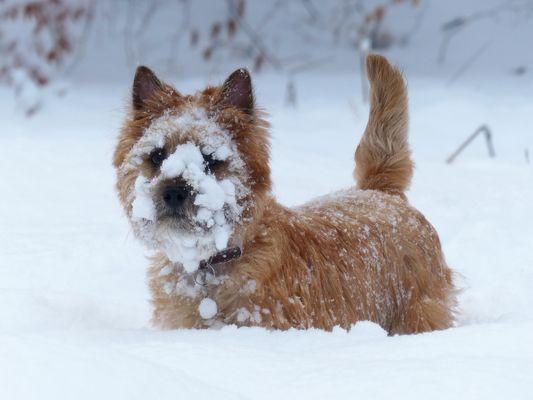 heliott et la.........neige
