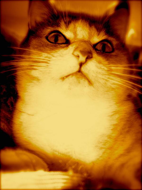 """""""Hellcat"""""""