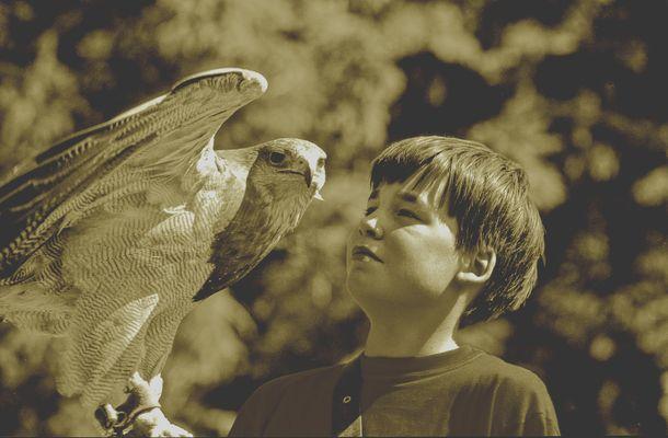 Hellenthal - Eiffel - L'oiseau et le garçon.