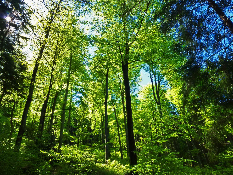 "hellgrüne ""Hölle"" - Frühlingswald im Ebbegebirge"