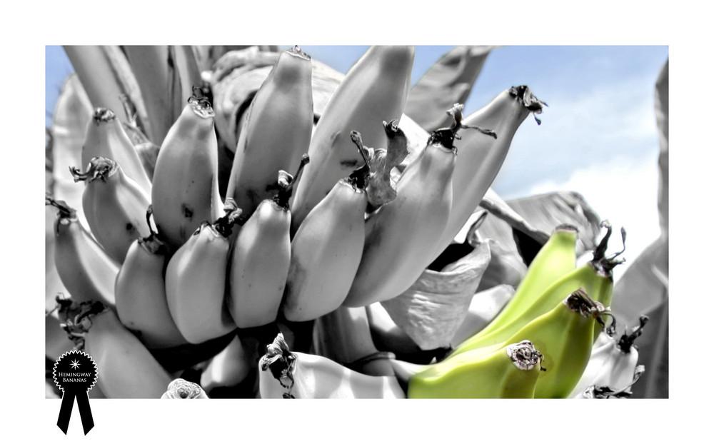 Hemingway's Bananas