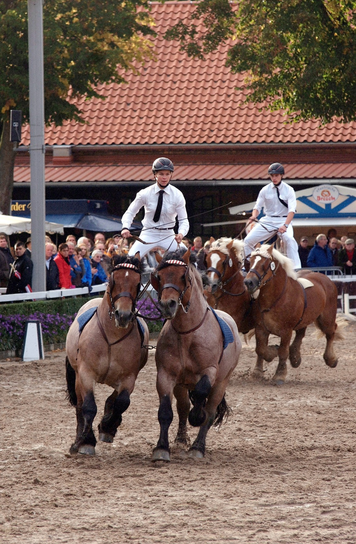 Hengstparade 2 Warendorf 2012