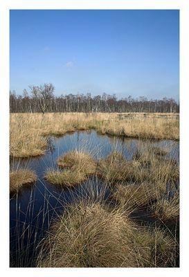 Henstedter Moor