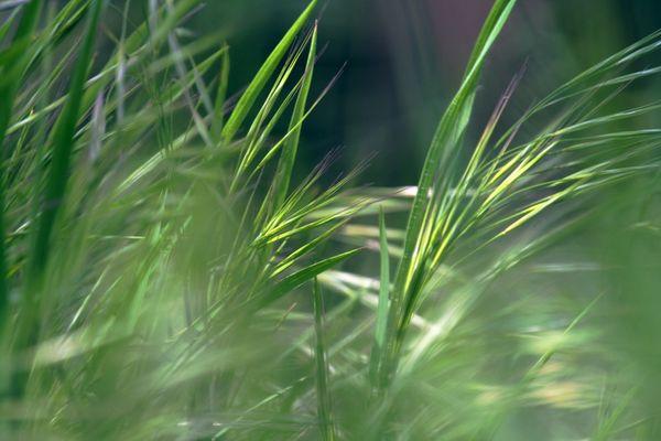 herbe...