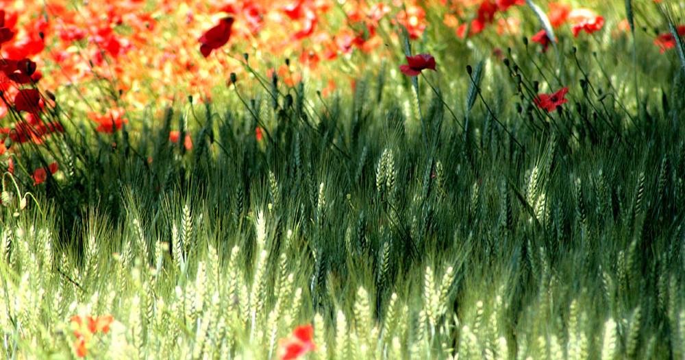 herbes folles 2