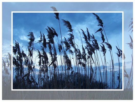 herbes hautes