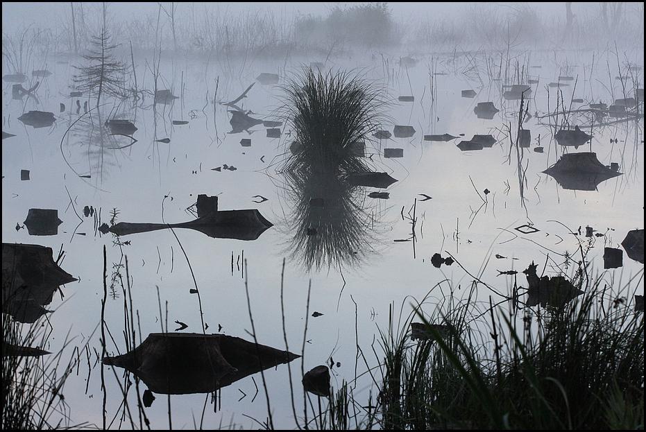 Herbisweiher im Morgennebel