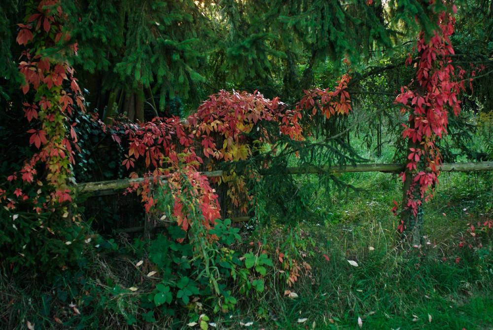 Herbst 01