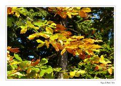 Herbst 06
