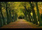 Herbst '07 - Lütetsburger Park