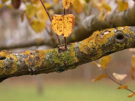 Herbst 1 - Ast