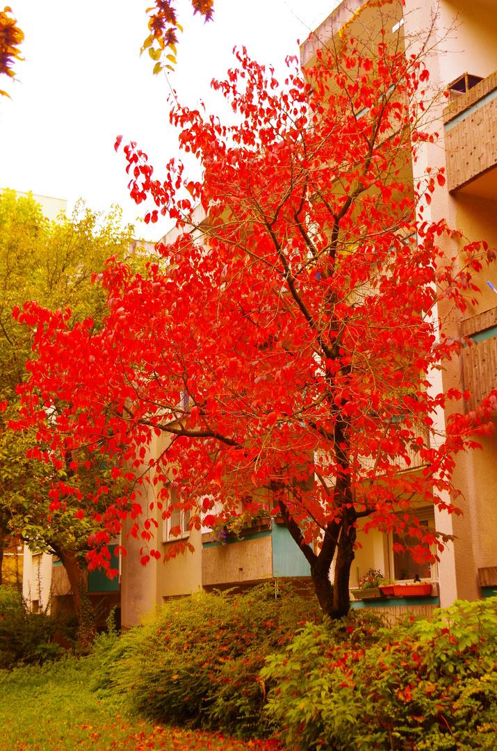 Herbst (1)