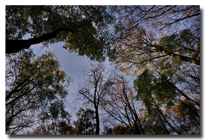 Herbst 11
