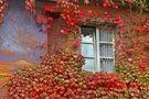 Herbst 13 von Kladiwo