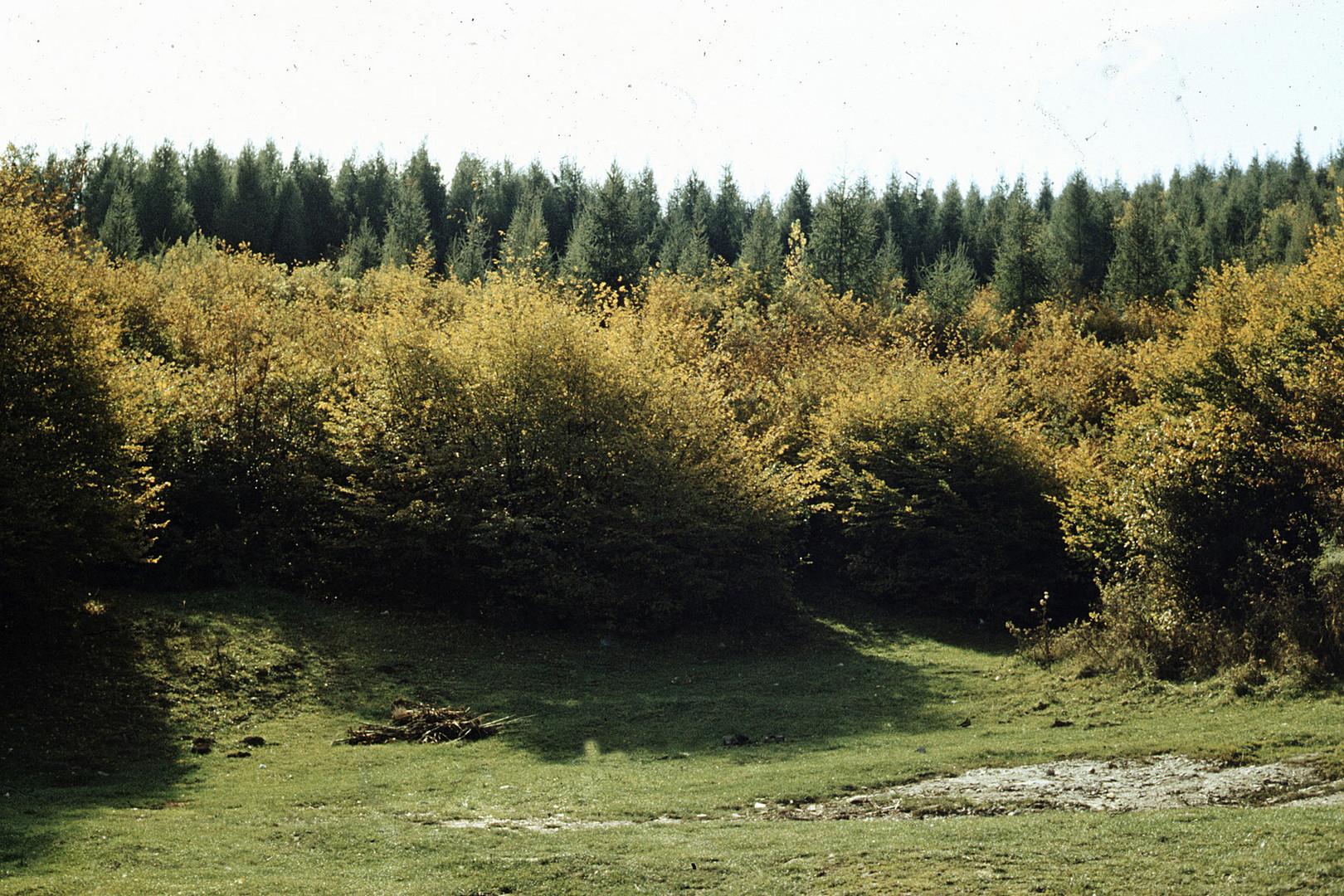 Herbst 1977 - 3