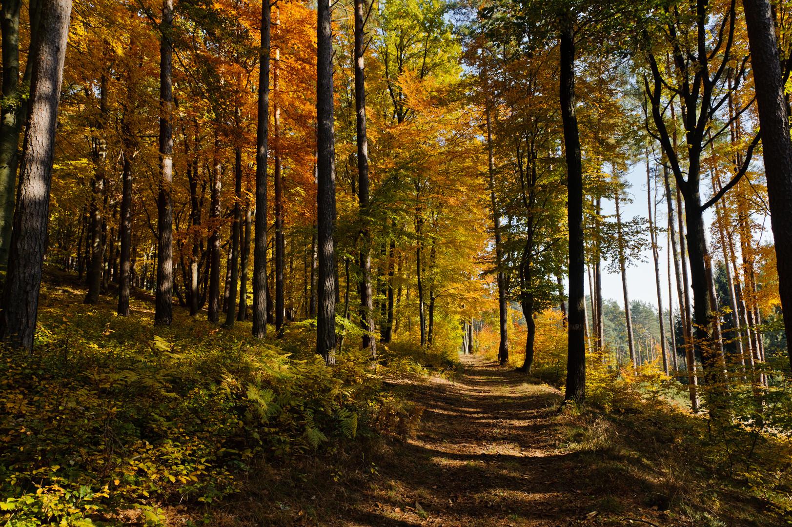 Herbst #2