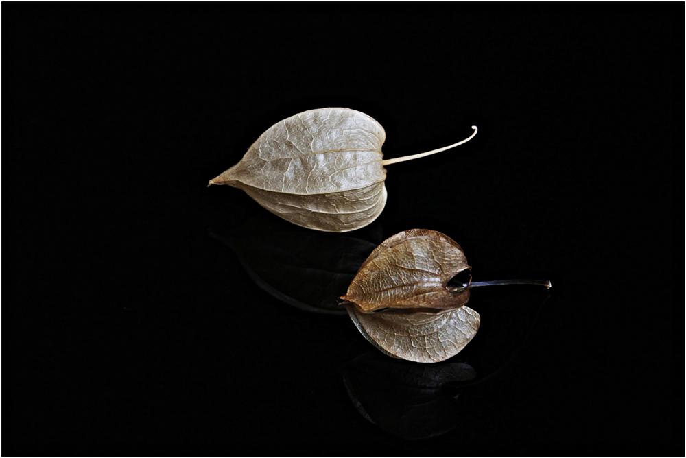 Herbst, 2