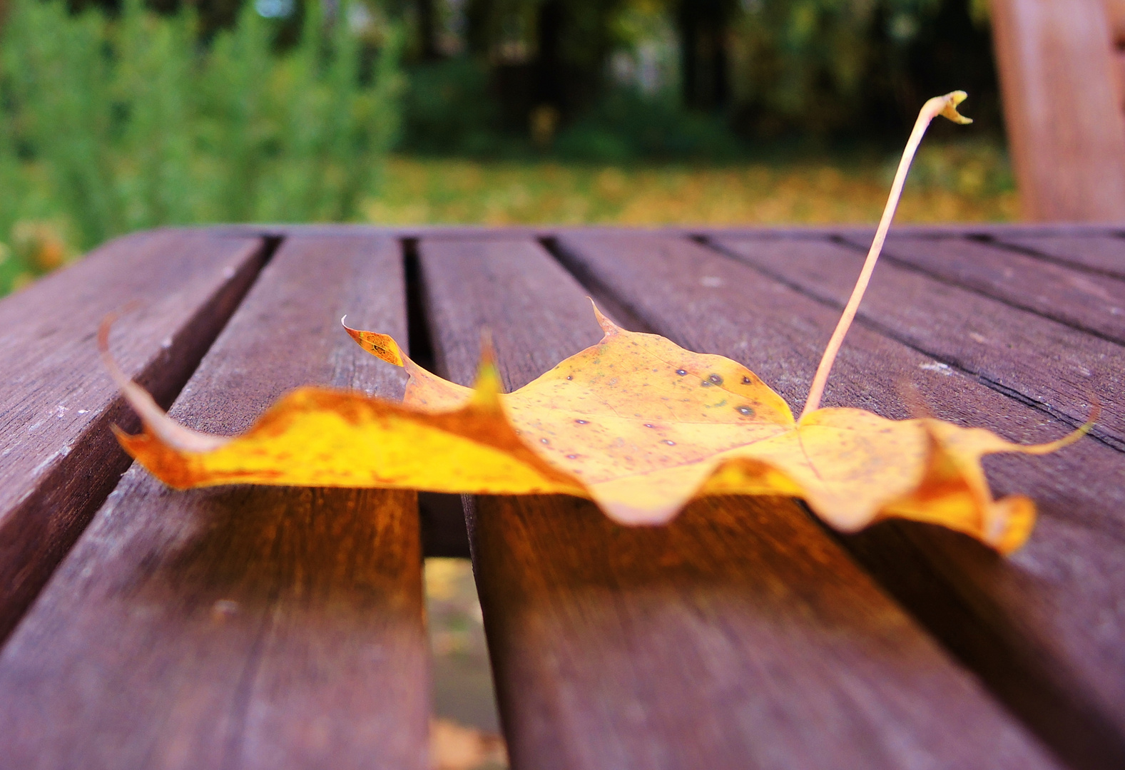 Herbst - 2. Versuch