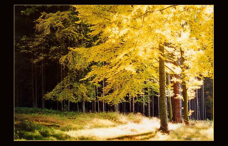 Herbst 2003- ich kann dich nicht vergessen!