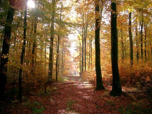 Herbst 2004 in der Eifel