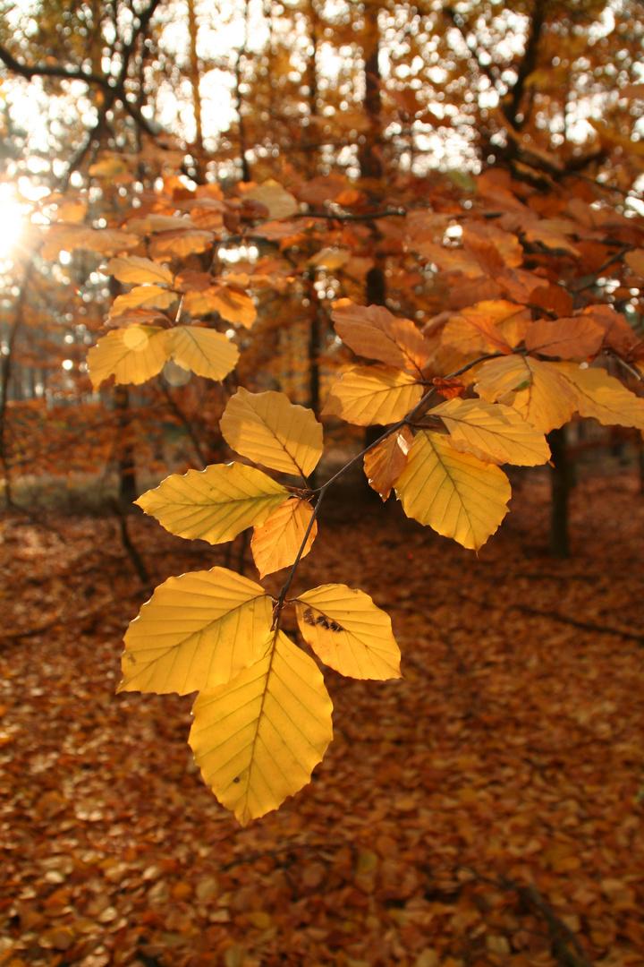 Herbst 2009