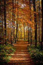 Herbst 2011_4