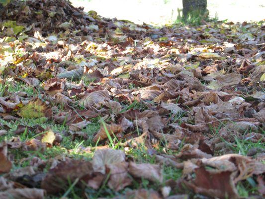 Herbst 2014 - Die Blätter fallen