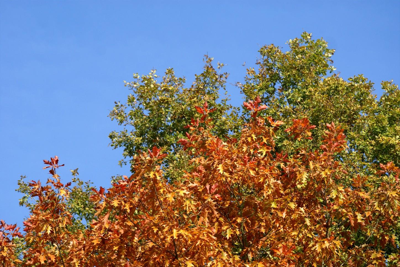 Herbst 22