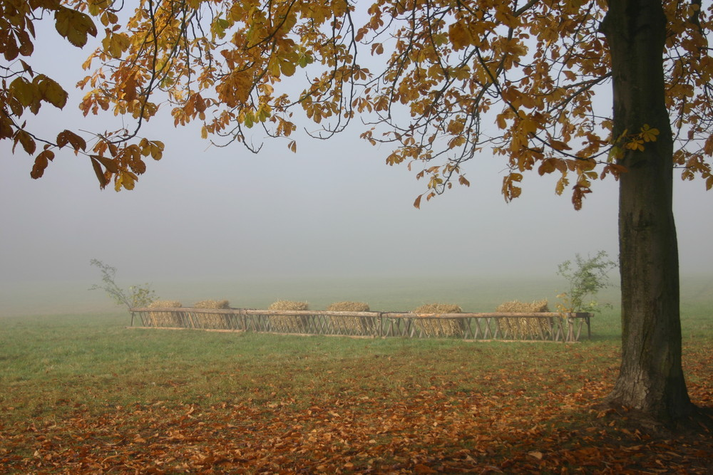 Herbst :)