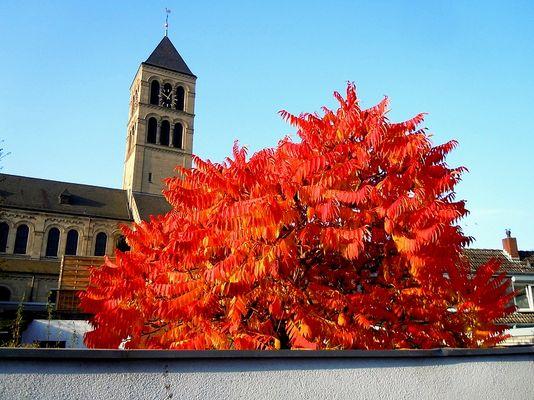 Herbst 23.10.2012 Df.- Hamm