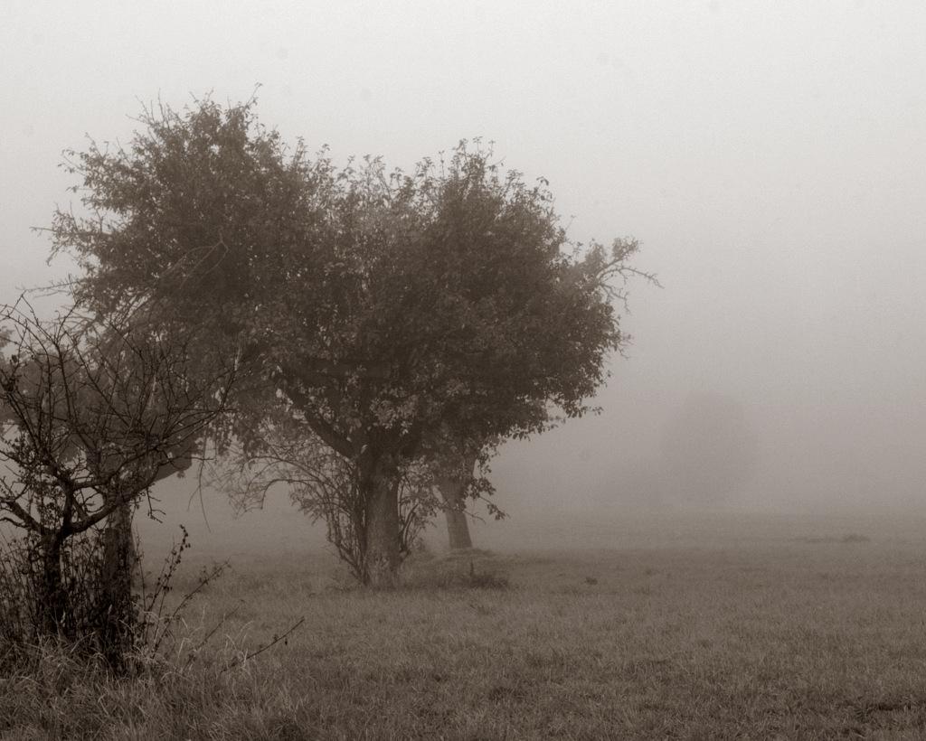 Herbst, #3