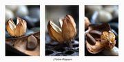DE: Herbst [3] by Augenpoesie