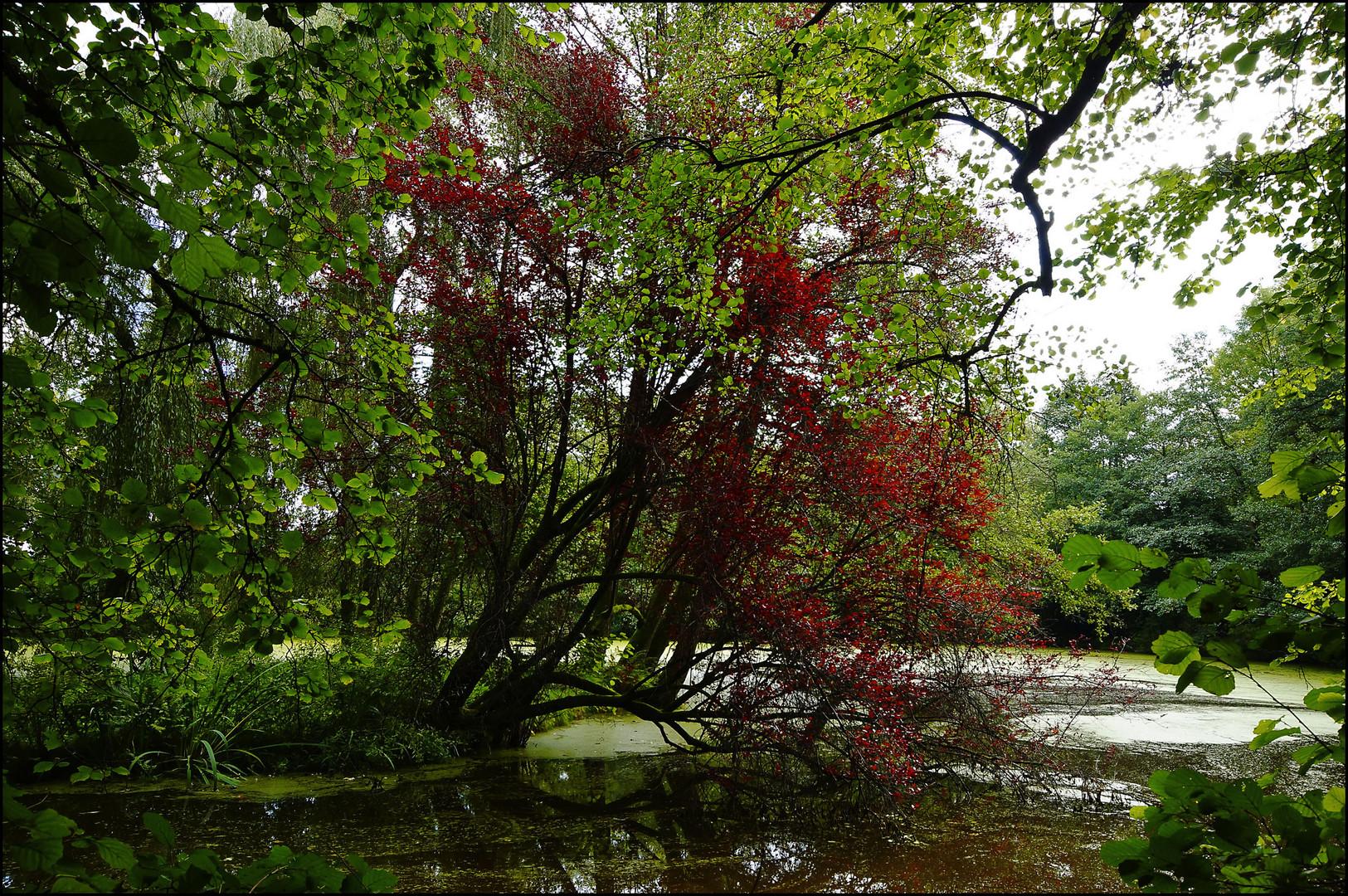 Herbst #4
