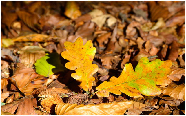 Herbst ...
