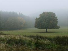 * Herbst *