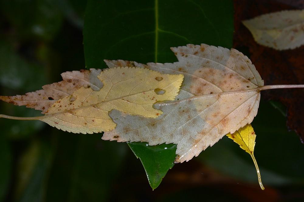 Herbst ..................:-/