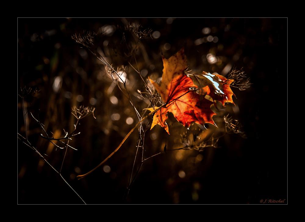 Herbst 8/2014