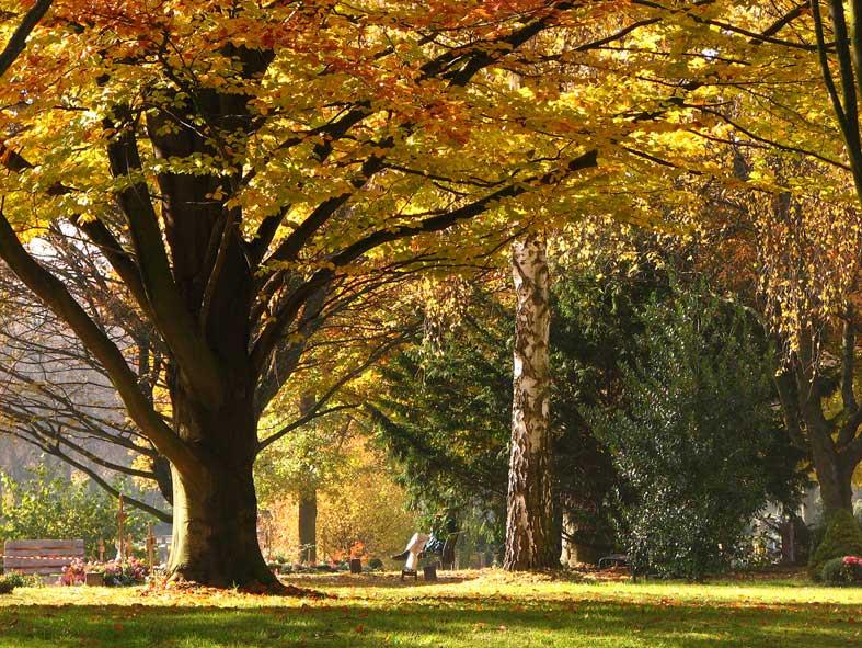 ...Herbst...