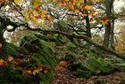 Herbst  ....