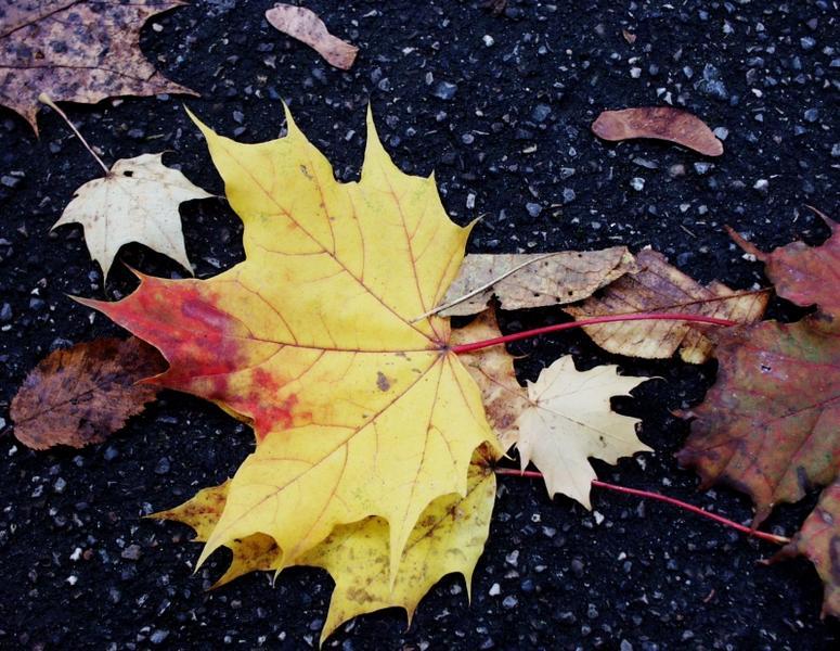 Herbst von Udo Walter Pick