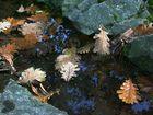 Herbst...