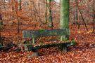 Herbst von leo1024