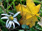 """"""" Herbst """""""