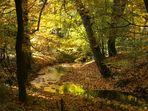 Herbst - Abschied von den Farben