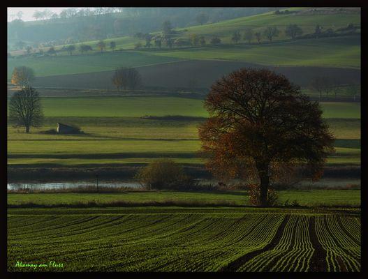 Herbst a.d. Weser-Morgenstimmung