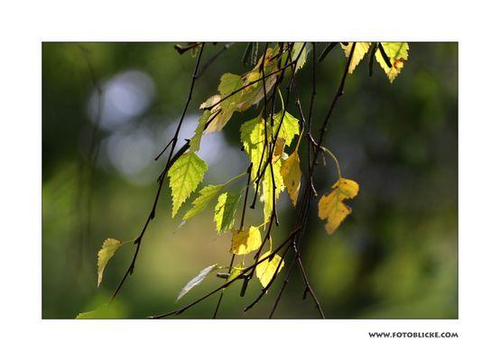 Herbst Ahnung
