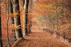 """Herbst Allee"""