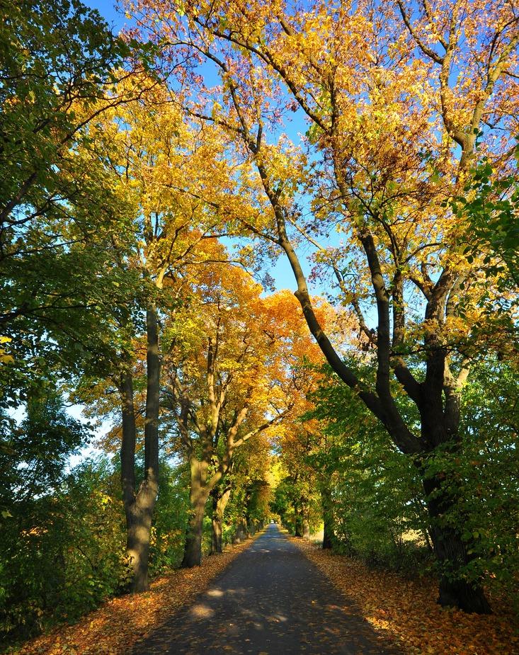 Herbst-Allee......